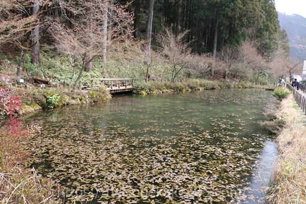 モネの池のがっかり残念な写真