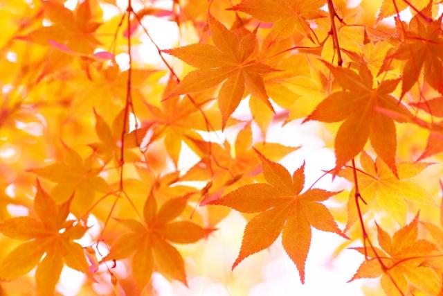 香嵐渓の見頃はいつまで?時間帯は?秋の紅葉がきれいにみえるのは?