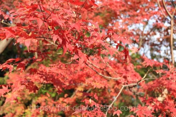 御在所ロープウェイの麓の紅葉