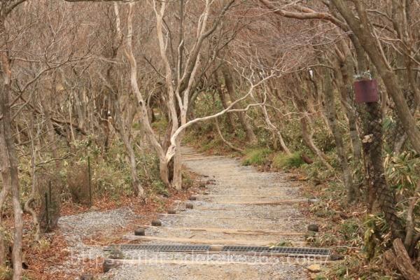 御在所ロープウェイの山頂の写真12月