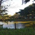 亀城公園(愛知県刈谷市)の駐車場や行き方などの情報まとめ